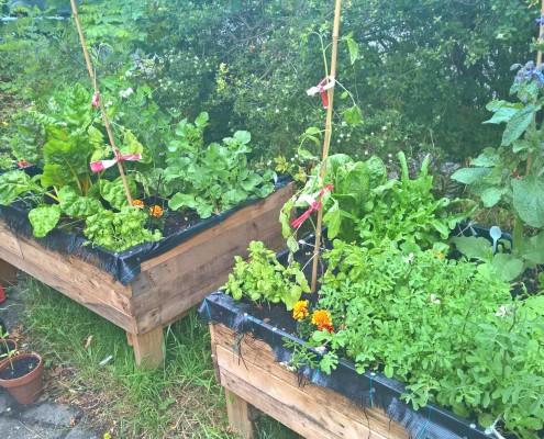 moestuin bak burthuis plantenbak haarlem schalkwijk buurthuis samenmetdebuurt